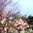 秋の瀬戸内